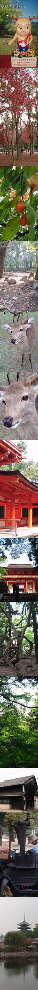 ジャパン・トリップ(3) 奈良公園