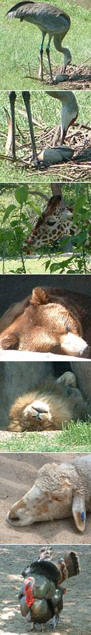母の日の動物園