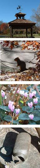 冬の植物園