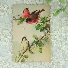 他の写真1: C.Klein ポストカード