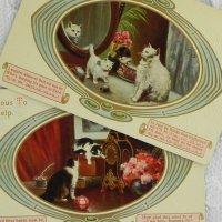 猫ちゃんポストカード2枚セット