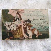 ポストカード、バスケットにいっぱいの子猫