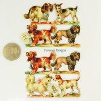 1800年代、ヴィクトリアン・クロモス【犬】8匹