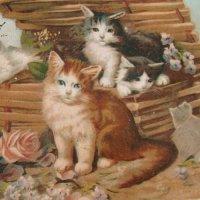 ポストカード、バスケットの猫ちゃん達