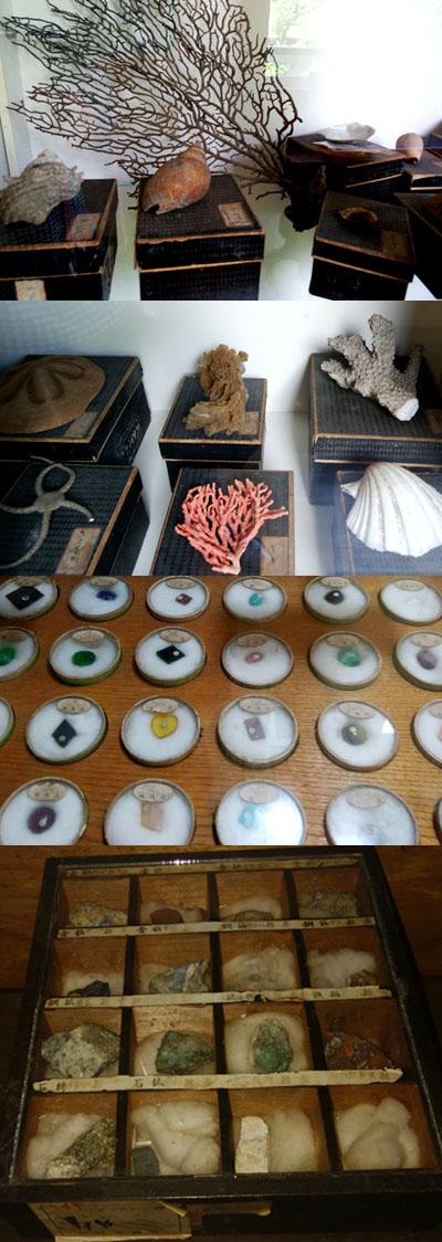戸隠地質化石博物館 (3)