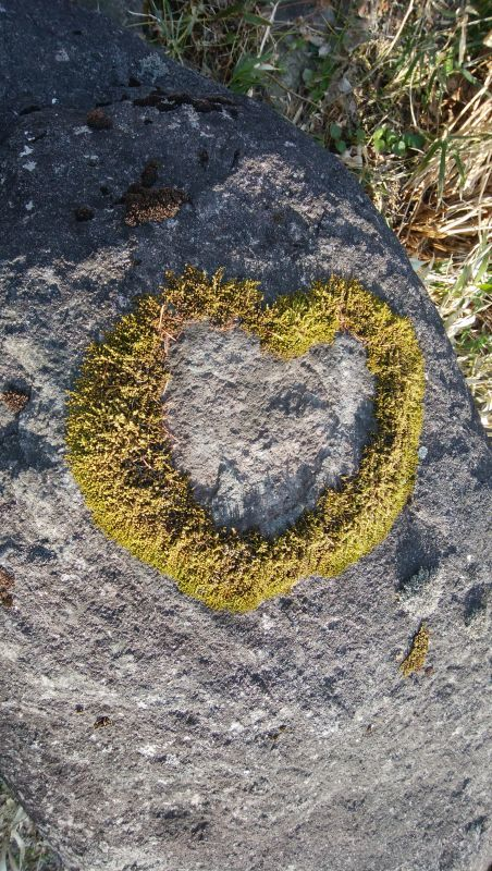 Heart Shaped Moss!